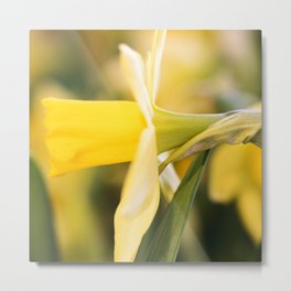 Tête-à-Tête Daffodil Side Profile Metal Print