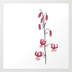 Lillium Martagon Red Flower Art Print