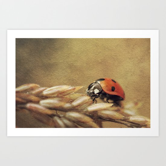 7 Spotted Lady Art Print