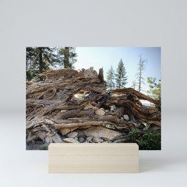 Ancient cedar roots  Mini Art Print