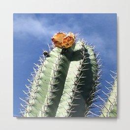 Aruba Cactus Metal Print