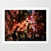 Cherry Blossoms Rainbow Art Print