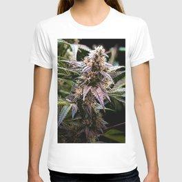 Purple Cannabis Bud in Black T-shirt