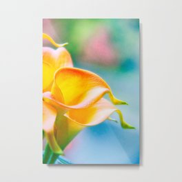 Orange Calla Lily Metal Print