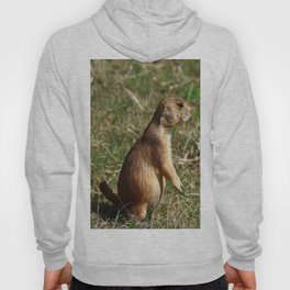 Black-tailed Prairie Dog Pose Hoody