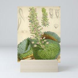 Flower 6102 saxifraga florulenta1 Mini Art Print