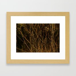Beyond The Branches  Framed Art Print