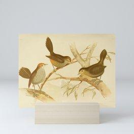 Vintage Print - The Birds of Australia (1891) - Bristle-Bird / Scrub-Birds Mini Art Print