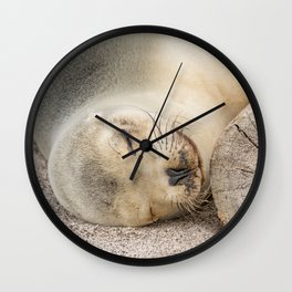 Sleeping sea lion on the beach Wall Clock