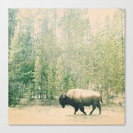 bison I Canvas Print