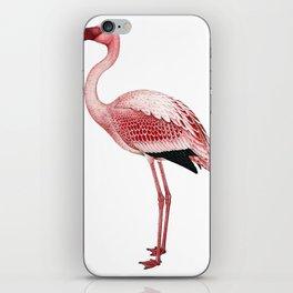 Pink Flamingo Isolated iPhone Skin