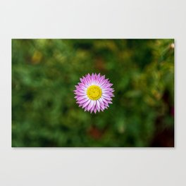 Pink flower with a yellow centre Canvas Print