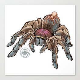 Spidey and Blinky tarantula drawing Canvas Print