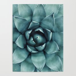 Aloe Green Agave Poster