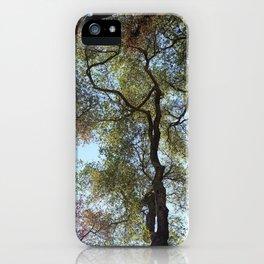 Dos Picos Ramona Oak Tree iPhone Case