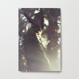 PNW light Metal Print