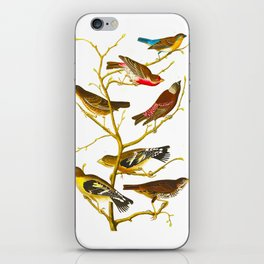 Lazuli Finch, Crimson-necked Bull-Finch, Gray-crowned Linnet, Cow-pen Bird, Evening Grosbeak, Brown iPhone Skin