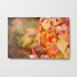 vine red yellow leaves abstract Metal Print