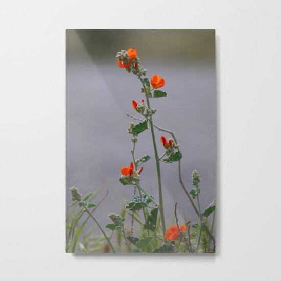 Desert Wildflower - 3 Metal Print