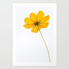 yellow cosmos flower Art Print