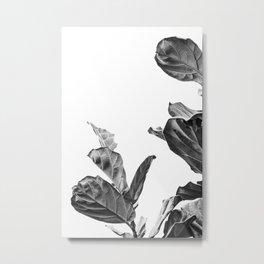 Ficus Lyrata in Black & White     The Houseplant Collection Metal Print