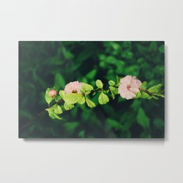 In the summer, we bloom Metal Print