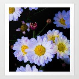 chamomile flowers Art Print