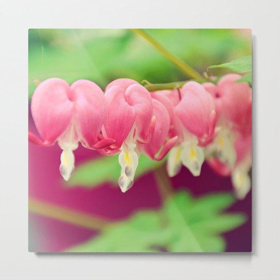 Bleeding heart flowers Metal Print