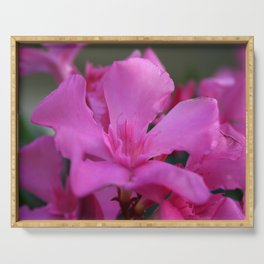 Pink Oleander Flower With Green Leaves in the Background Serving Tray