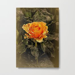 Orange Rose in oils Metal Print