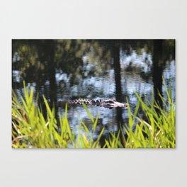 Alligator Moving Along Canvas Print