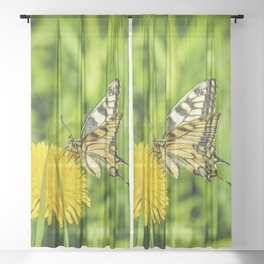 The Old World swallowtail (Papilio machaon) Sheer Curtain