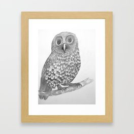 Little Morepork Owl Framed Art Print