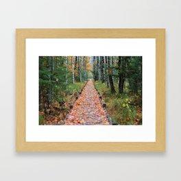 Jesup Trail Acadia National Park Framed Art Print