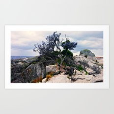 Tree in the Bay of Fires Art Print