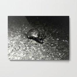 Snail. Metal Print