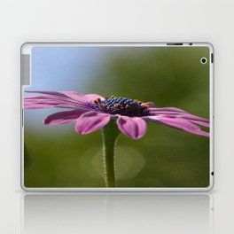 Macro Shot Of A Purple Osteospermum Laptop & iPad Skin