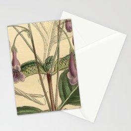 Streptocarpus orientalis 139 8526 Stationery Cards