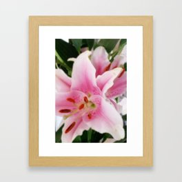 Oriental Lily Framed Art Print
