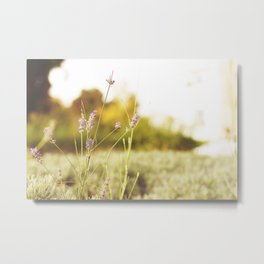Golden Lavender Metal Print
