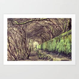 The living forest Art Print