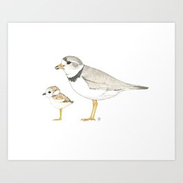 Piping Plover Nature Illustration Art Print