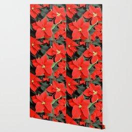 Beautiful Red Poinsettia Christmas Flowers Wallpaper