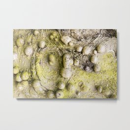 Tree Bark Close up with Burl Growth Metal Print