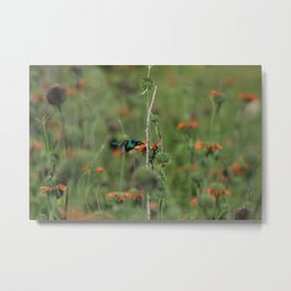 Sparkling Violetear Hummingbird and Orange Flower Metal Print