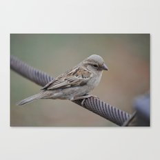 Pilanesberg Bird 01 Canvas Print