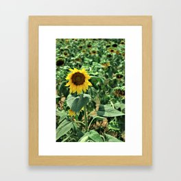 Flower No 6 Framed Art Print