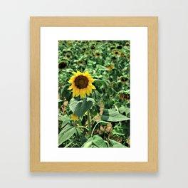 Flower No 6 Framed Art Print