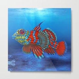 Mandy, the Mandarin Fish Metal Print