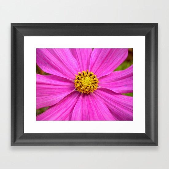 pink cosmos I Framed Art Print
